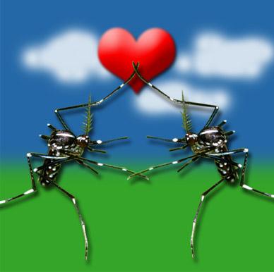 amor-dengue.jpg